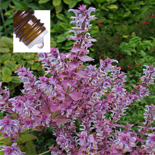 Clary Sage Pure Essential Oil