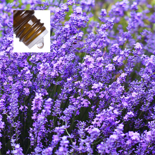 Lavender Bulgarian Organic Pure Essential Oil