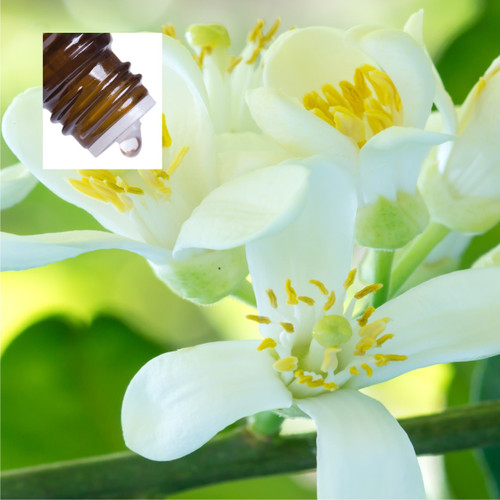 Neroli Egypt Pure Essential Oil