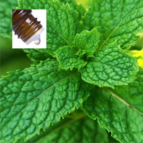 Peppermint Supreme USA Pure Essential Oil