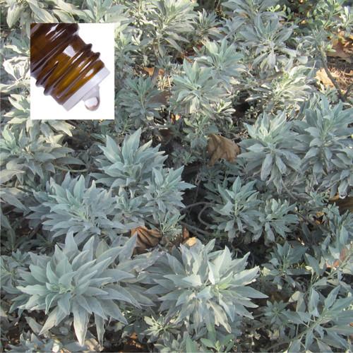 Sage White Pure Essential Oil