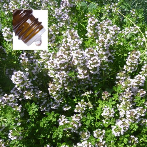 Thyme Lemon Wild Pure Essential Oil