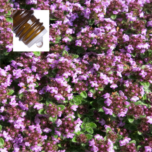 Thyme Red Spain Pure Essential Oil