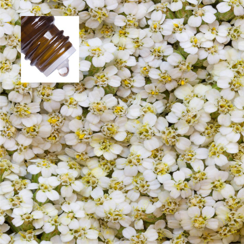 Yarrow Pure Essential Oil