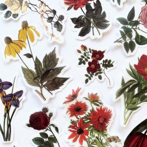 Sticker Pack: Vintage Vellum Botanicals