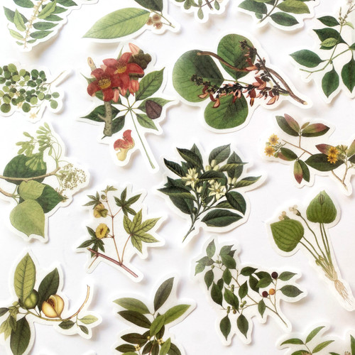 Coast of Coromandel Botanical Stickers | Set of 20