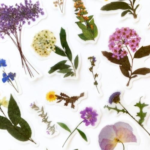 Thistle & Ochre Vintage Botanical Stickers | Set of 20