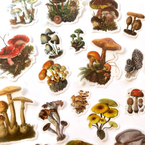 Fungi Botanical Stickers | Set of 20 stickers