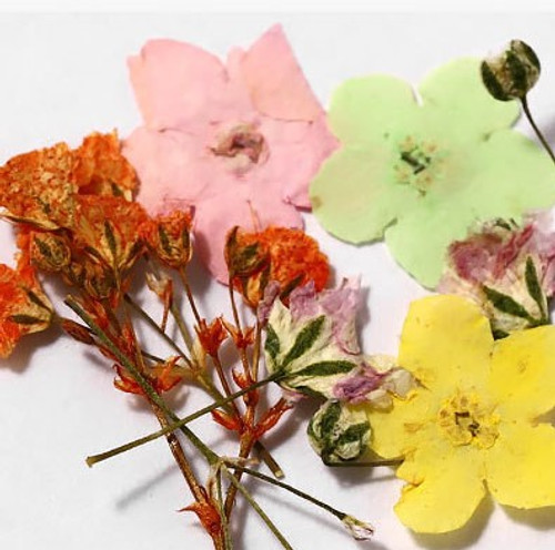 Assorted Colorful Dried Nail Art Flowers