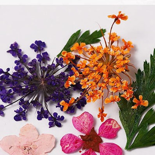 Assorted Colorful Dried Nail Art Flowers with Leaves