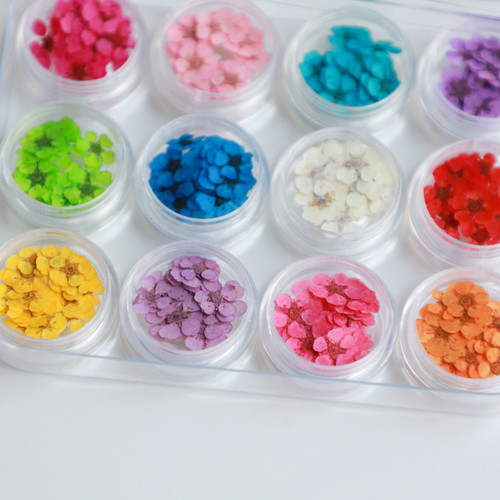 Individual Colorful Dried Nail Art Flowers