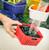 Berry Box washing berries