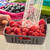 Bitty Berry Box - berry colander