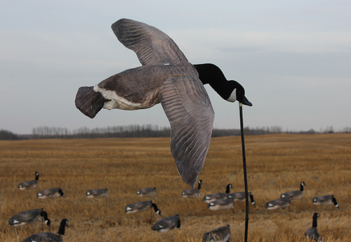 White Rock Deck Boss Canada Goose Flyer Decoy