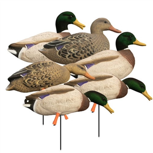 Higdon Full Body Flocked Head Mallard 6 Pack with Bag