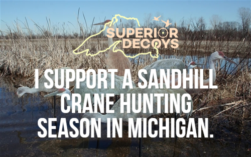 Here's Where Michigan Stands on a Sandhill Crane Season