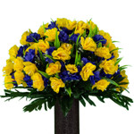 Yellow and Purple Daffodil (SM)