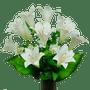 White Satin Lily