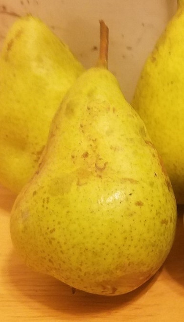 Harrow Delight Pear Tree