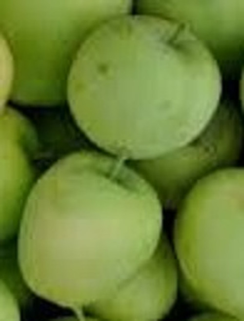 Lodi Apple Tree