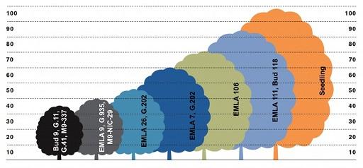 rootstock-size-chart.jpg