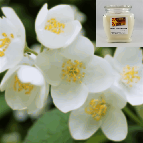 Jasmine 500g Soy Footed Jar Candle