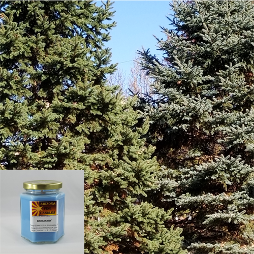 Evergreen Forest 210g Hexagon Jar Soy Candle