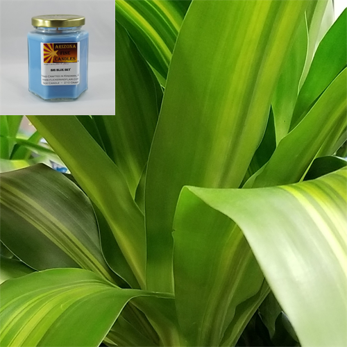Going Green 210g Soy Hexagon Jar Candle