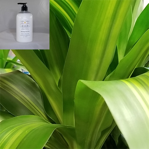 'Going Green' Hand & Body Lotion