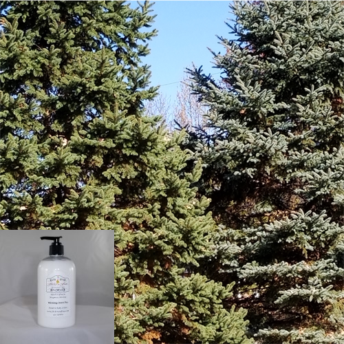 'Evergreen Forest' Hand & Body Lotion