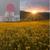 Sun Kissed Fields Bubble Bath Bombs - Four Pack