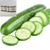 Crisp Cucumber Cocoa & Shea Butter Natural Soap 4 Pack