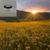 'Sun Kissed Fields' Whipped Sugar Scrub