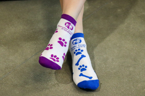 Full color woven anklet sock. One sock GDA blue with logo, dog bones and pawprints. The other sock TLC purple with logo and pawprints.