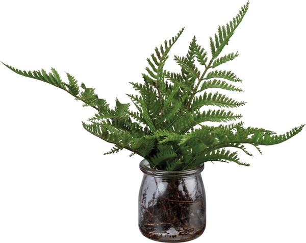 102359 Floral - Fern In Jar - Set Of 4 By Primitives by Kathy