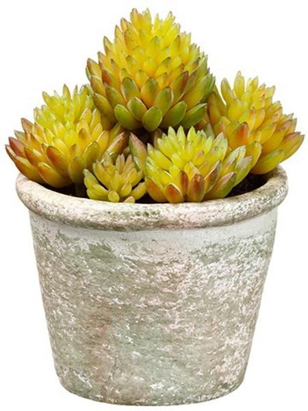 "4.5"" Sedum In Paper Mache Pot Green 12 Pieces LQS020-GR"