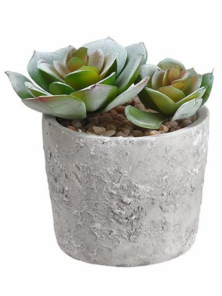"4"" Echeveria In Cement Pot Green 6 Pieces LQS851-GR"