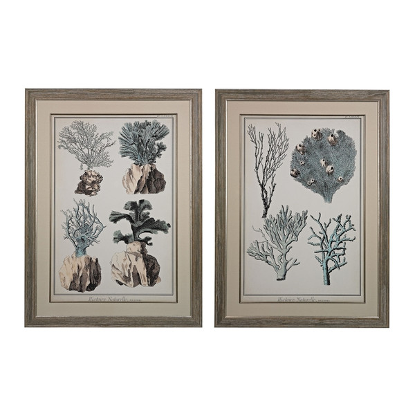 Oversized Coral Species I And Ii - Fine Art Giclees Under Glass