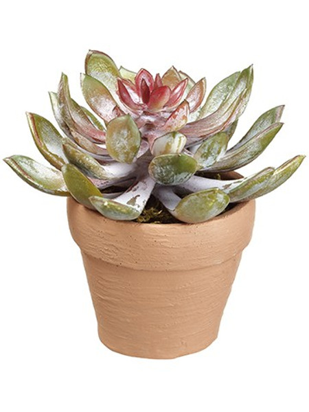 "5"" Aeonium In Terra Cotta Pot Green Burgundy (Pack Of 4) LFA937-GR/BU By Silk Flower"