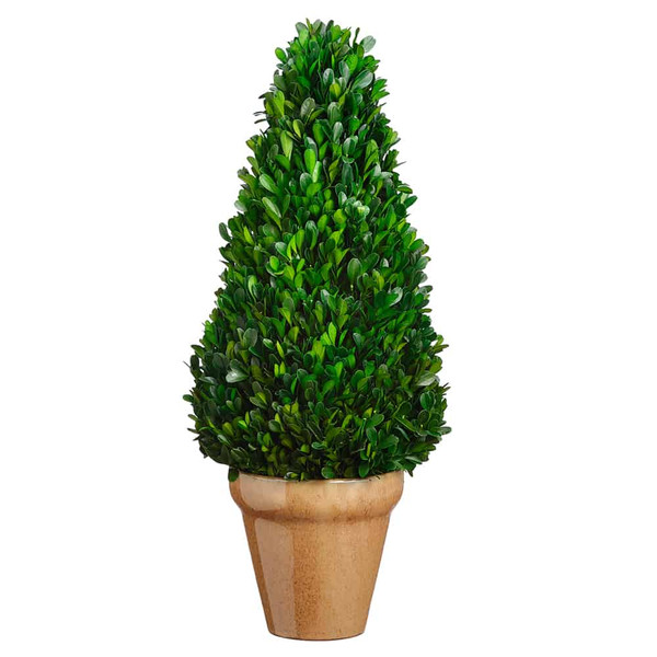 "20.8"" Preserved Boxwood Cone Topiary In Ceramic Pot Green APS146-GR By Silk Flower"
