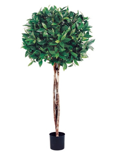 3' Bay Leaf Topiary With 1036 Leaves And Braided Trunk In Pot (Pack Of 2) LPB033- By Silk Flower