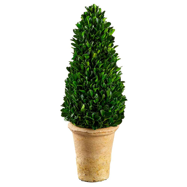 """16.5"""" Preserved Boxwood Cone Topiary In Clay Pot Green KPB115-GR By Silk Flower"""