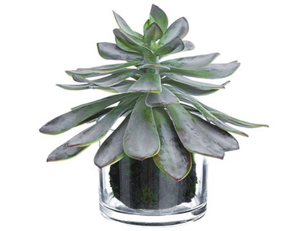 "10"" Echeveria In Glass Vase Gray Burgundy 2 Pieces LQS262-GY/BU"