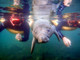 Crystal River FL, Home of the Manatees $9,899
