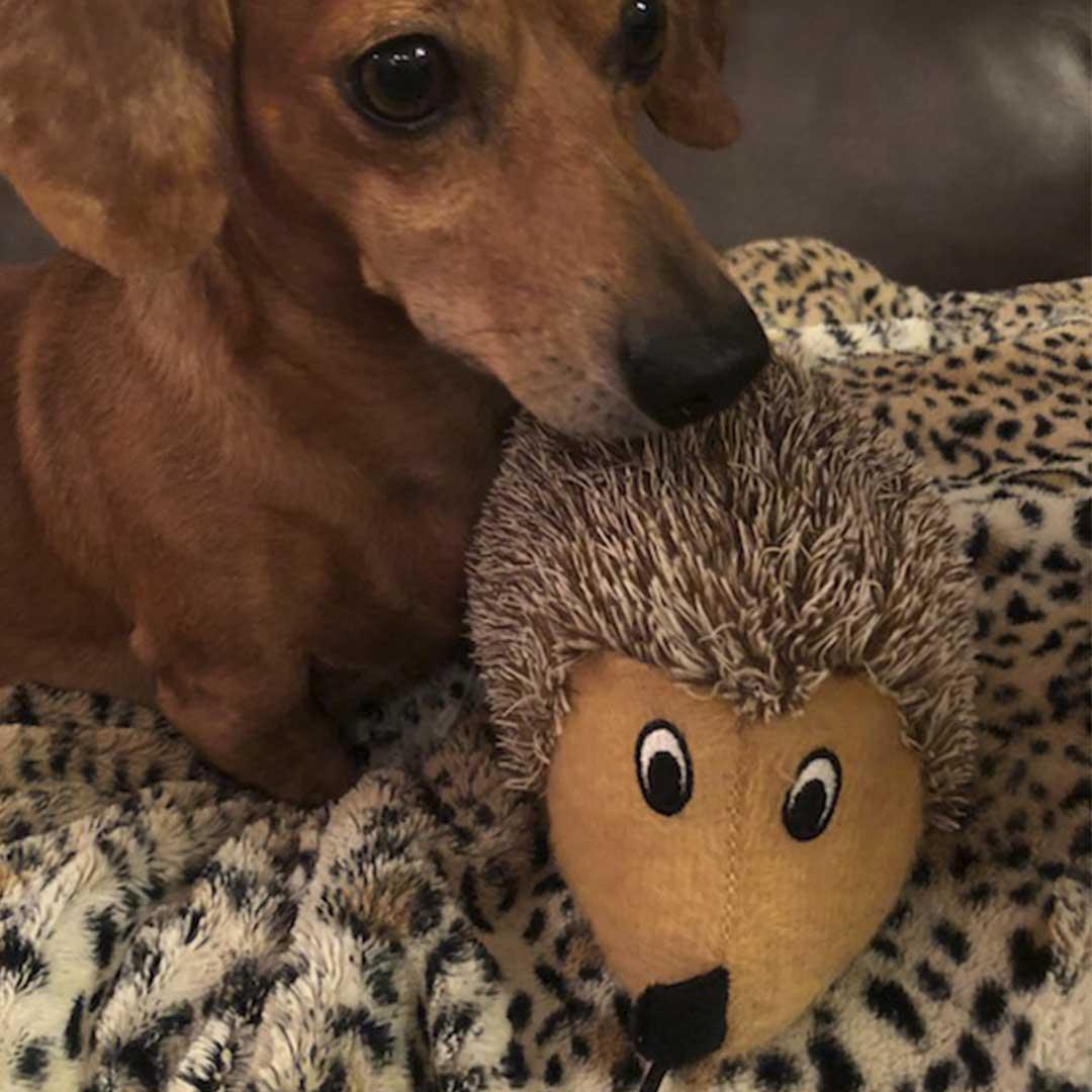 My Furry Pal CBD Gift Bundle - Medium Dog