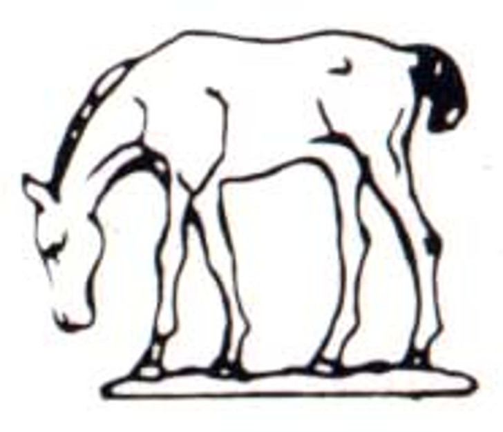 Foal with head down