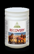 Purica Recovery EQ Powder 1 kg | 815555001101