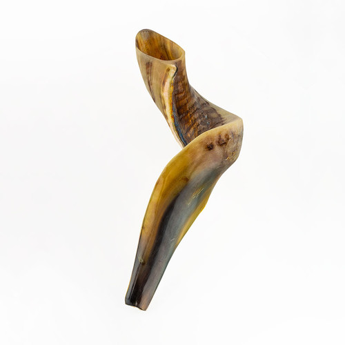 Medium Rams Horn Shofar | Museum of the Bible