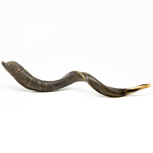 Large Yemenite Shofar | Museum of the Bible