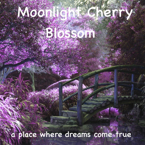 Moonlight Cherry Blossom Meditation